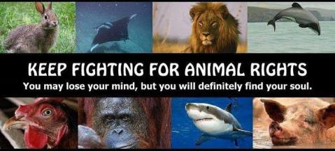 Animal abuse - Animal rights keep fighting
